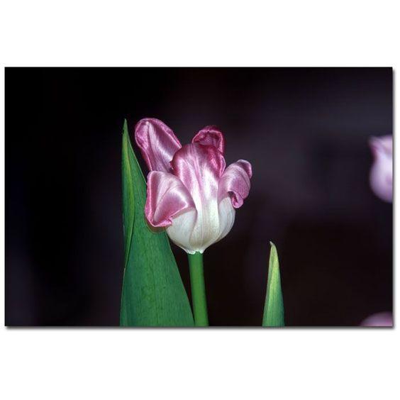 """Trademark Fine Art Martha Guerra 'Purple' 16"""" x 24"""" Canvas Art"""