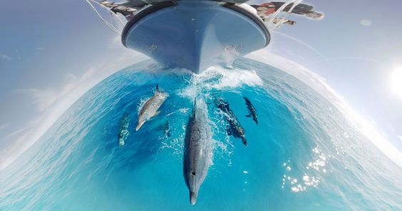 nice 360 Underwater Video Lets You Swim With Dolphins