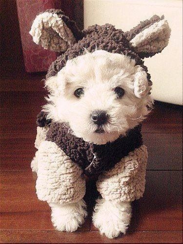 So cute, I can hardly stand it!
