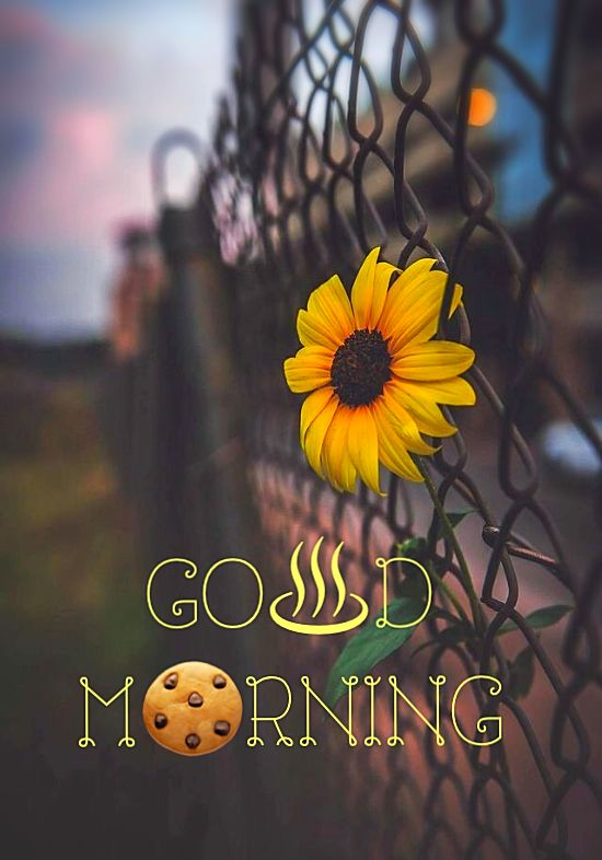 Amazing Good Morning Quotes That Will Make You Happy Good Morning Beautiful Pictures Good Morning Beautiful Images Good Morning Flowers