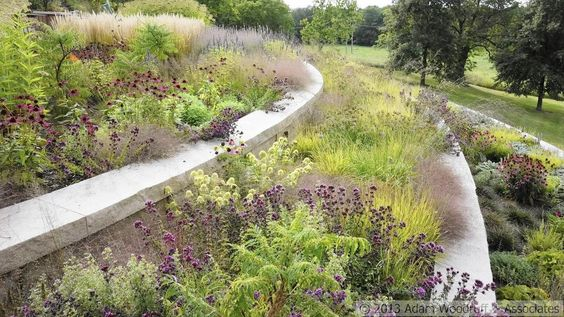 """Dry meadow, lush lookThis stylish dry meadow, designed by Adam Woodruff, contains plants from all over the world but creates harmony because the plants come from related habitats, write the authors of """"Planting in a Post-Wild World."""""""
