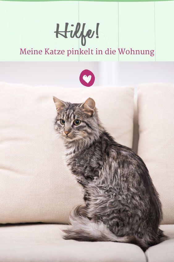 Katze Pinkelt In Die Wohnung Was Tun Katze Pinkelt Katzen Katzen Wohnungen