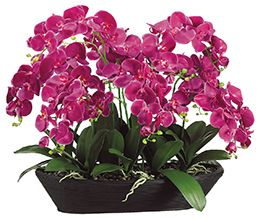 Phalaenopsis in Oval Bamboo Container