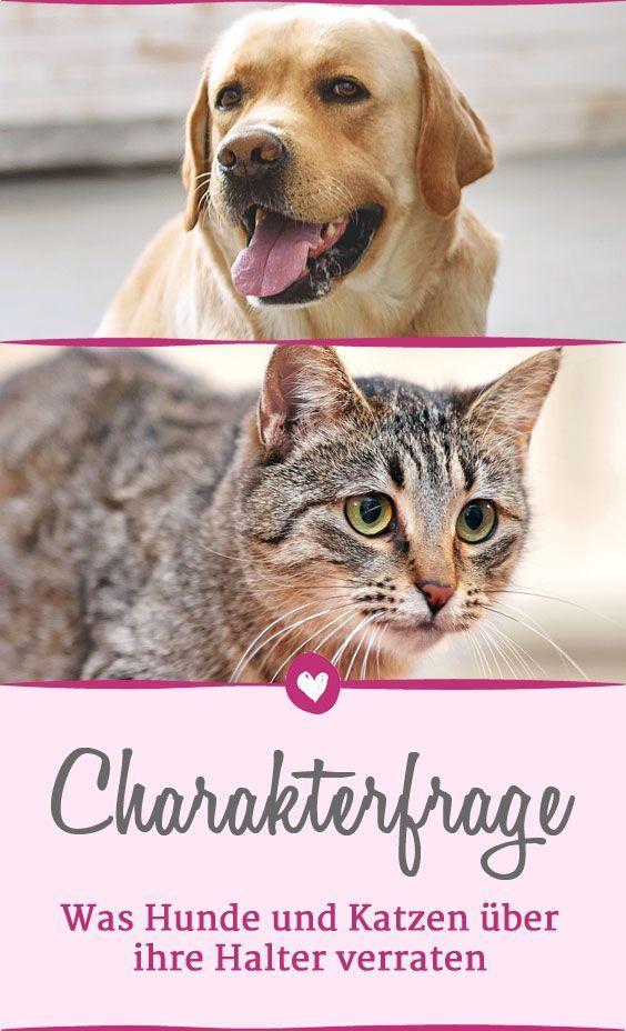 Hund Oder Katze Welches Haustier Wirklich Zu Ihnen Passt