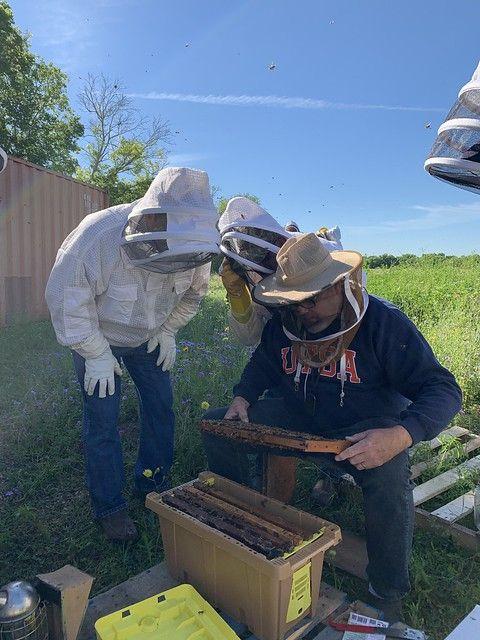 Begin Beekeeping Beekeeping Beekeeping Bees Honeybees Apiarist Apiary How To Start Beekeeping Raising Bees Bee Keeping