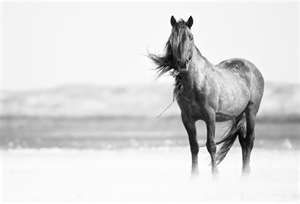 the peace a horse brings you can't be explained, only felt