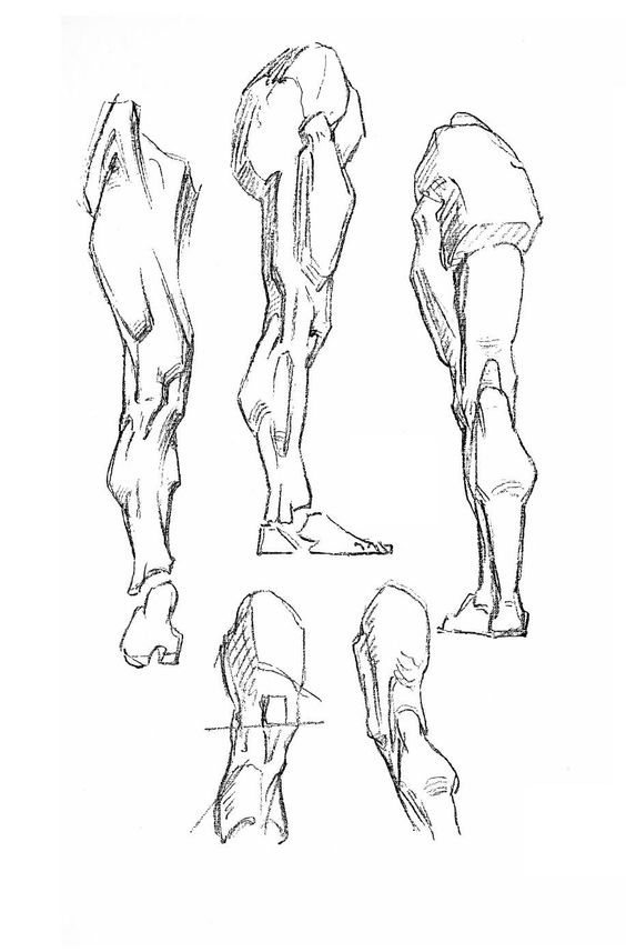 Constructive Anatomy by George Bridgman