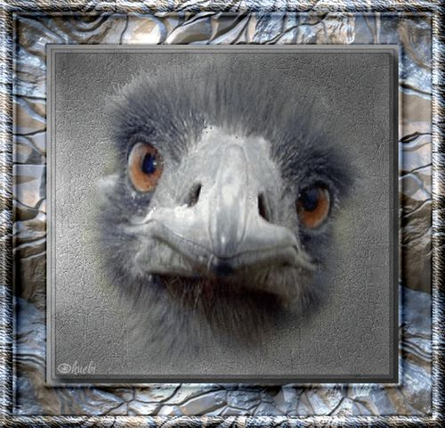 Zickeria - Tiere