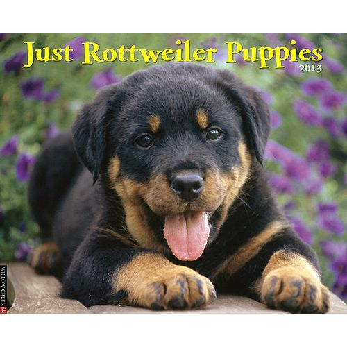 Just Rottweiler Puppies Wall Calendar: What's black and brown and cute all over? Rottweiler puppies, of course! Twelve cheerful, full-color photographs typify all the roly-poly sweetness of these little guys and gals.  $13.99  http://calendars.com/Rottweilers/Just-Rottweiler-Puppies-2013-Wall-Calendar/prod201300002900/?categoryId=cat10163=cat10163#