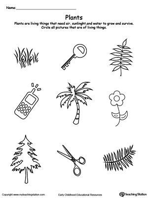 math worksheet : understand living things plants  plant science worksheets and  : Living And Nonliving Things Kindergarten Worksheets