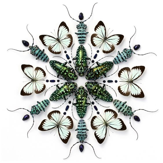 Christopher Marley insect art - stunning!: