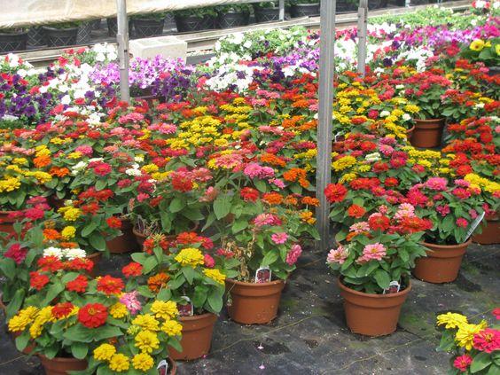 franksville flowers