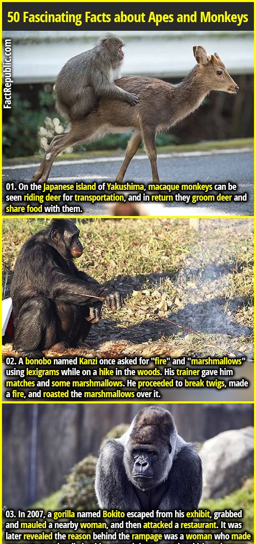 monkeys fact republic fun facts