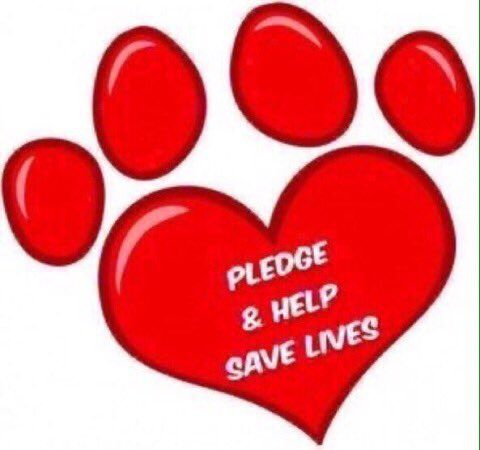 NYC ACC shelters kill cats dogs pets daily. You can Pledge any amount to save to a rescue group go to  Urgent Death Row Cats of NYC AC&C and Urgent Death Row Dogs of NYC AC&C Info pictures of cats and dogs on death row given 24 hrs to be adopted otherwise they are killed Look for Pledges info Daily Nightly on Twitter trying to SAVE CATS AND DOGS ON DEATH ROW ADOPT DONT SHOP SAVE LIVES BY GIVING EACH ONE THEIR SECOND CHANCE FOR LIFE FOR HAPPINESS