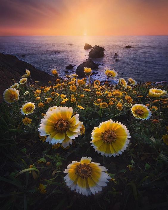 Sharp Park Beach, Mori Point, Pacifica, California, USA. Michael Shainblum @shainblumphotography
