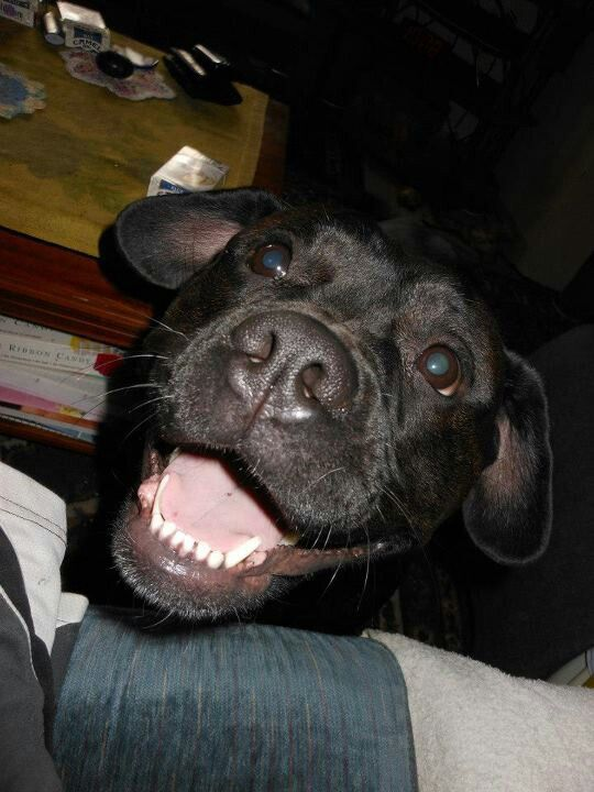 Dogs love to smile!!