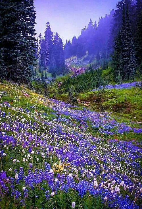 I Came To Some Beautiful Flower Covered Hills With Trees In The Distance It Is Sights Like These That Make S Me Ta Landscape Nature Pictures Beautiful Nature