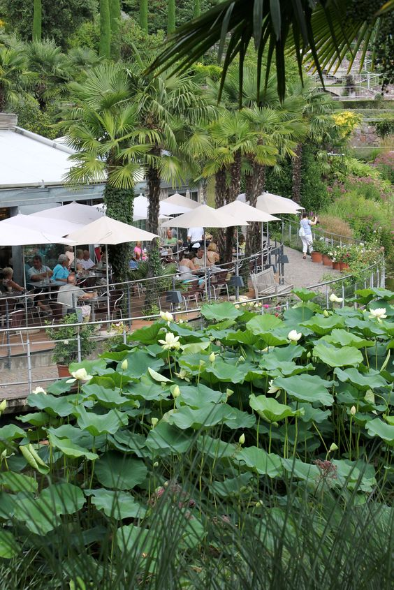 Cafe am Seerosenteich mit Lotos | Il Cafè al laghetto delle ninfee con i fiori di loto