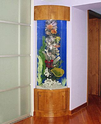 Feng shui for wealth with fish tanks the office for Corner fish tanks