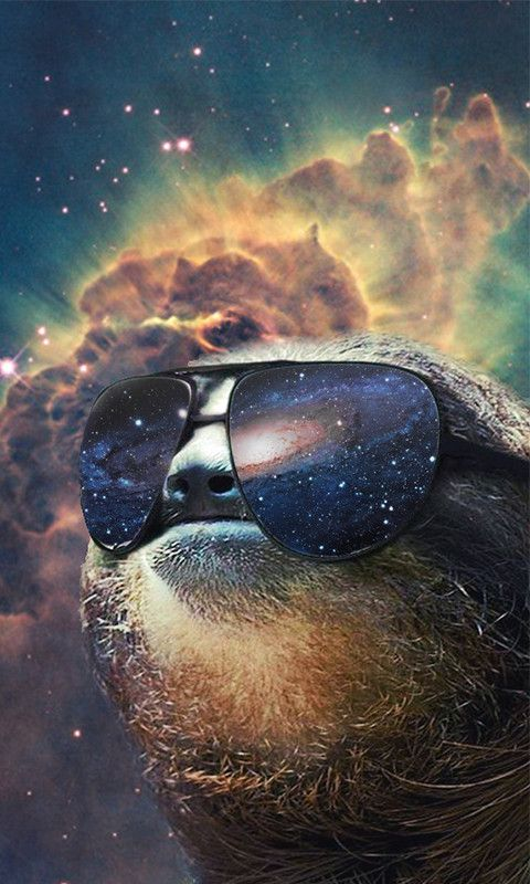 Backgrounds sloths and phone backgrounds on pinterest - Sloth wallpaper phone ...