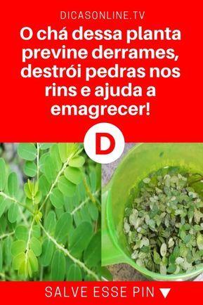 Quebra Pedra Cha O Cha Dessa Planta Previne Derrames Destroi