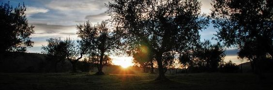 Under the Umbrian sunset