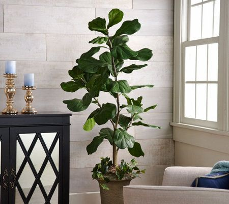 5' Potted Fiddle Leaf Tree in Pot by Valerie — QVC.com