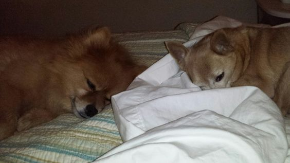 Marley and Charley, ready for bed.