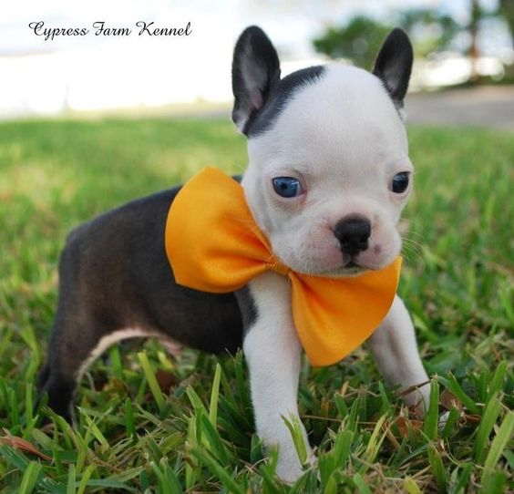 Terrier Puppies, Blue Eyed Baby And Babies On Pinterest
