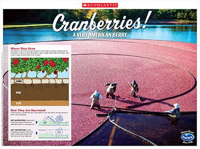 Lesson Plans and activity sheets + video on Cranberries.