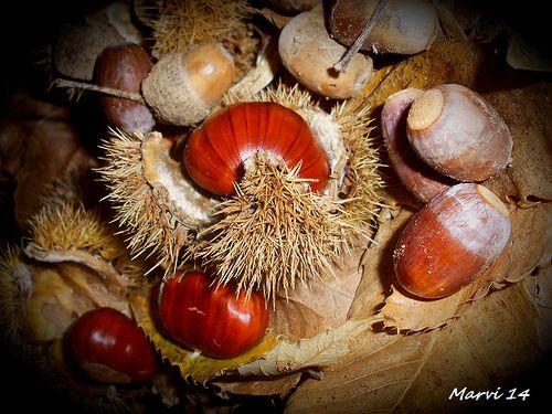 Souvenirs d'automne