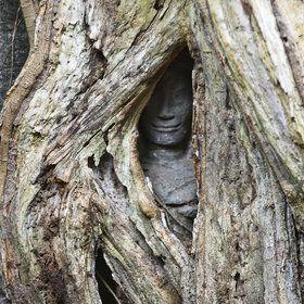 Catherine Zasukhina:  Angkor Wat
