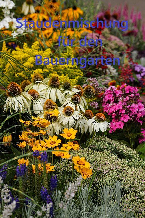 Prachtvolle Mischung mittlerer bis hoher Stauden, die im Bauerngarten, Staudengarten, in Kübeln und Trögen einen farbenfrohen Blickfang bieten Blütezeit: von April bis in den Oktober eine Mischung aus verschiedenen farbenprächtigen blühenden mittelhohen bis hohen Stauden... ***Pin enthält Werbelink