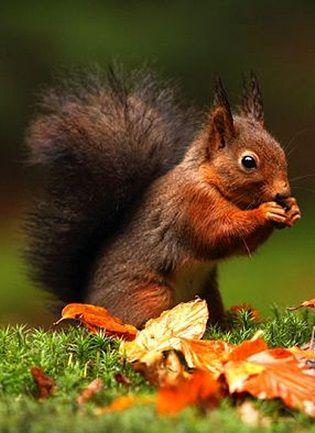 Busy Squirrel by Jodi Strijdhorst