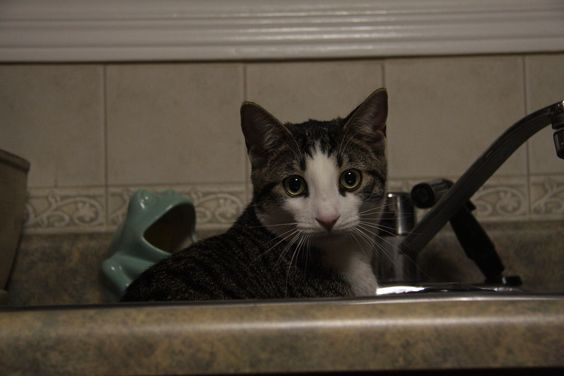 'Bug' in a sink ;-)