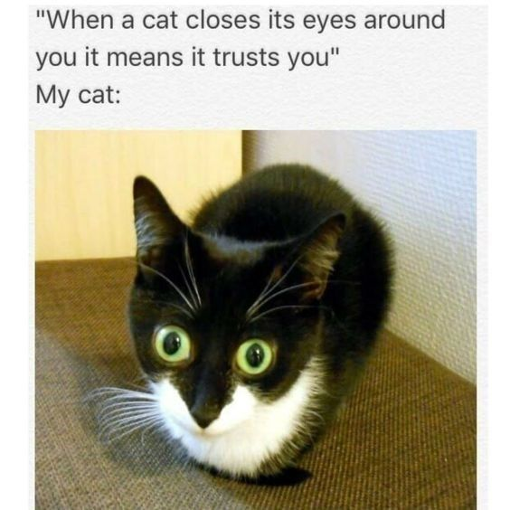 You Have Decided Here Are The Best Cat Memes Of The Decade 100 51 Cute Cat Memes Funny Cat Memes Funny Animal Memes