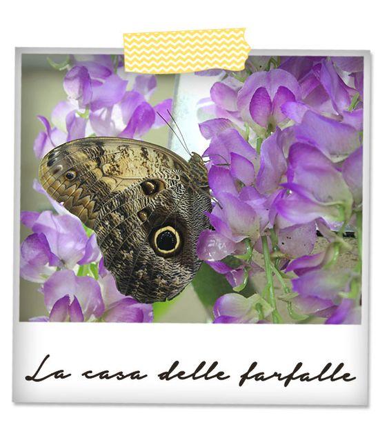 #telaraccontocosi La casa della farfalle modica ragusa Sicilia ME creativeinside