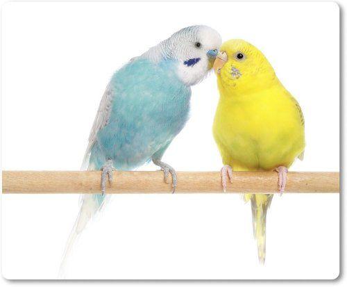 Mauspad / Mouse Pad - Wellensittiche gelb und blau auf der Stange [03]