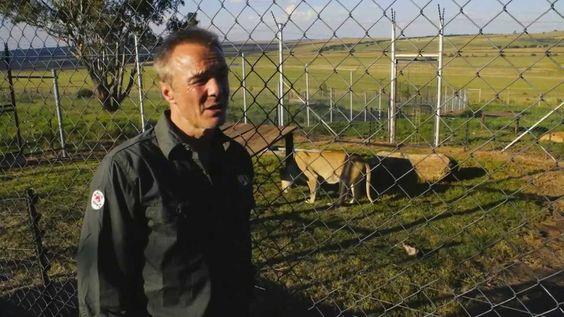 Hannes Jaenicke zu Besuch im VIER PFOTEN Grosskatzenrefugium LIONSROCK