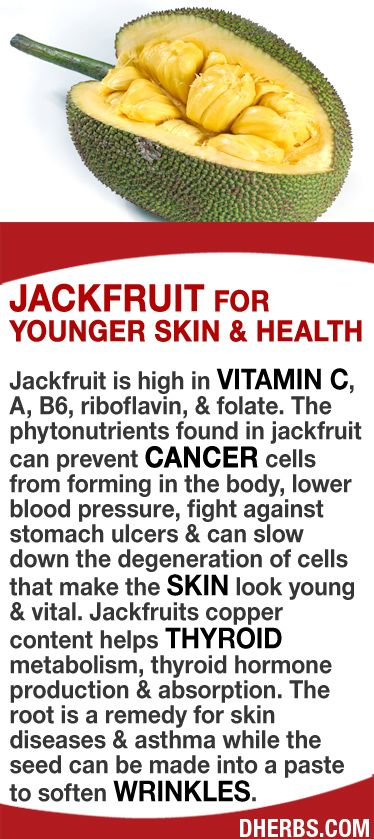 Jackfruit is high in Vitamin C, A, B6, riboflavin, & folate. The phytonutrients found in jackfruit can prevent cancer cells from forming in the body, lower blood pressure, fight against stomach ulcers & can slow down the degeneration of cells that make the skin look young & vital. Jackfruits copper content helps thyroid metabolism, thyroid hormone production & absorption. The root is a remedy for skin diseases & asthma while the seed can be made into a paste to soften wrinkles. #dherbs