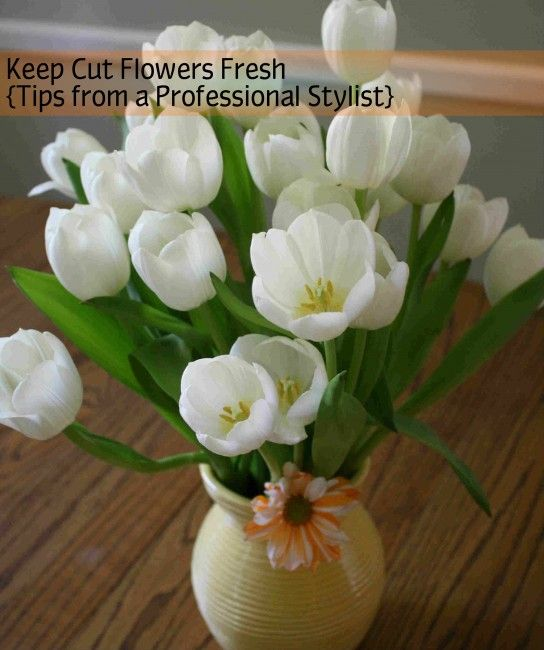 How to Keep Cut Flowers Fresh (Tips from a Professional Stylist)