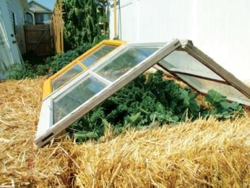 Cool straw bale cold frame for tall crops like kale