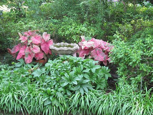 shady garden inspiration..