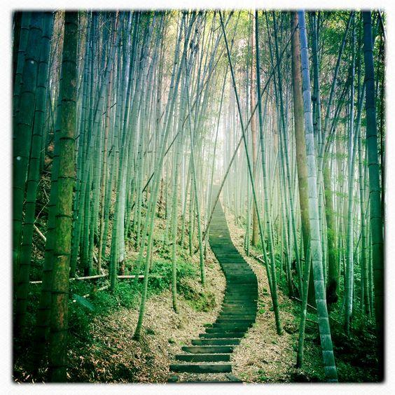 Bambouseraie brumeuse de 奮起湖 (fenchihu, Taiwan) - crédit : Wan-Chin Lin