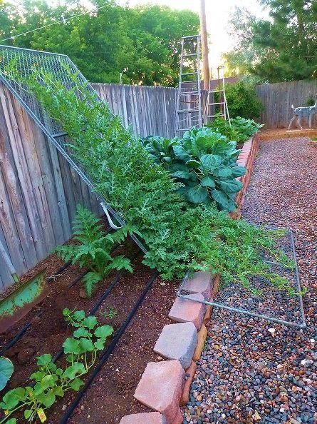 vertical watermelon, gardening