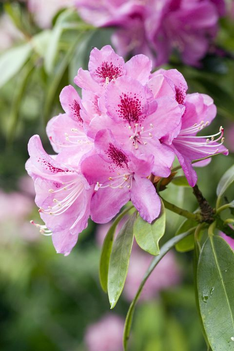 The Surprising Meanings Behind Your Favorite Flowers Azalea Flower Flower Meanings Different Kinds Of Flowers