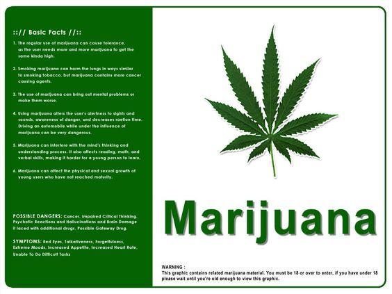 legalizing marijuana essay