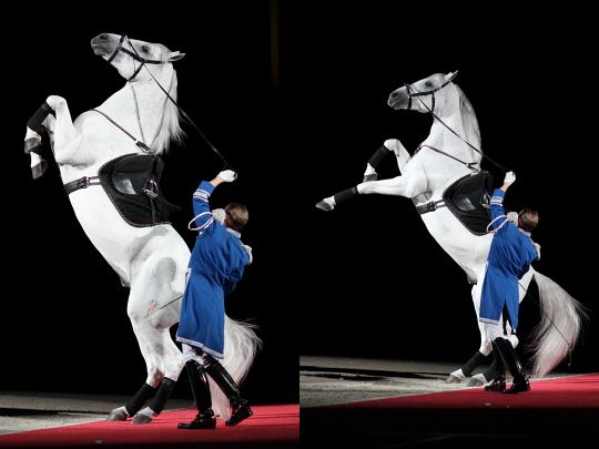 Mezair; In the mezair, the horse rears up and strikes out with its forelegs. It is similar to a series of levades with a forward motion (not in place), with the horse gradually bringing its legs further under himself in each successive movement and lightly touching the ground with the front legs before pushing up again.