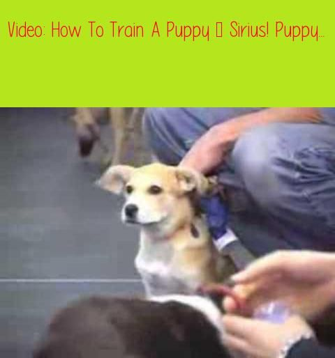 How To Train A Puppy Sirius Puppy Training4 Books 13 Videos
