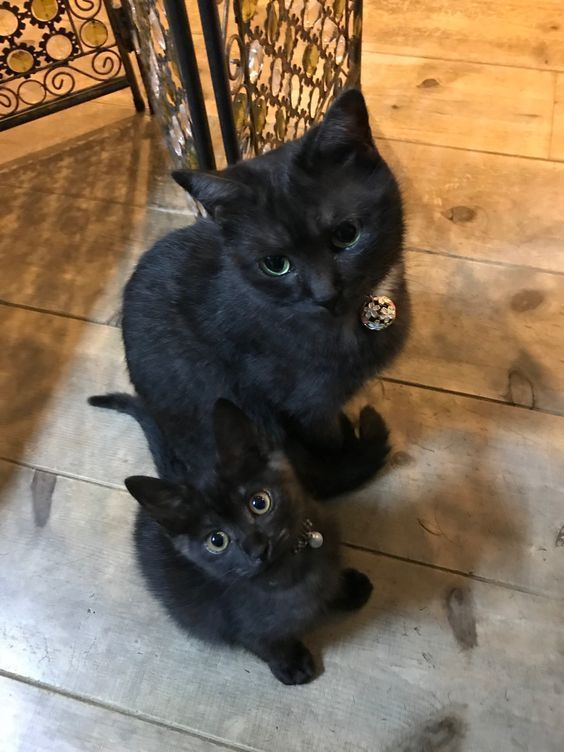Kitties Cute Cats Cute Cats Kittens Cute Animals